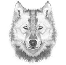Drawn Wolf 71 Best Wolf Heads Images Wolf Drawings Wolves Sketches Of Animals