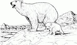 Small Picture Printable polar bear coloring pages ColoringStar