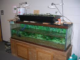 news and on aquaponic fish tanks pay a visit to why youll need