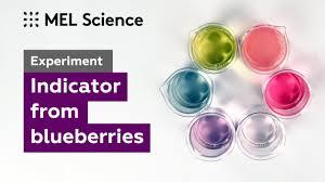 Blueberries Indicator Experiment Mel Chemistry