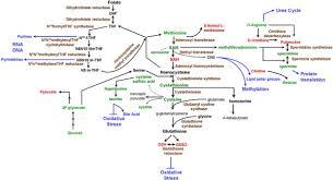 Methionine Metabolism Pathway A Bio Chart Of The Methionine