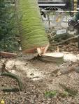boom omhakken
