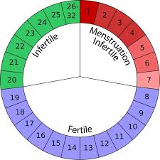 How To Calculate Your Ovulation Days And Days You Havent