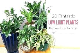 non toxic plants for dogs terrific poisonous house plants fresh house plants low light for indoor