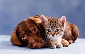 puppy and kitten cuddling. Plain Kitten Puppy And Kitten Cuddle And Cuddling N