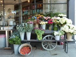 Florist Shop Display Stands New Shop Display Strelitzia Software