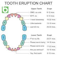 Precise Deciduous Teeth Numbers Chart Of Baby Teeth Coming