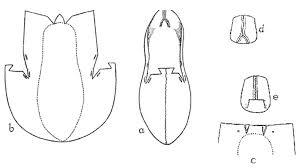 Shoe Pattern Mesmerizing Shoe Pattern MikeNguyen