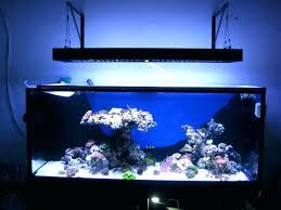 led aquarium lighting guide led aquarium lighting reef central guide r reef