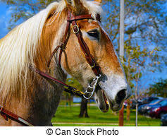draft horse head profile. Perfect Draft Head Horse Background Intended Draft Horse Profile R