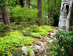 Small Picture Woodland Planting Ideas Creating a shade garden gallery design