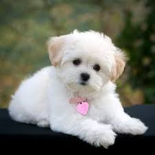 best dog breeds for kids and apartments dog pet photos gallery