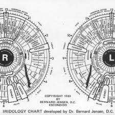 Dr Bernard Jensen Iridology Chart Iridology Chart Developed By Bernard Jensen 12 Download
