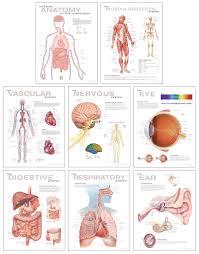 Human Anatomy Chart Set