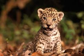 cute amazon rainforest animals. These Baby Amazon Animals Will Melt Your Heart Pachamama Alliance Intended Cute Rainforest
