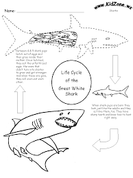 Shark Activity Sheet - Lifecycle of a Shark