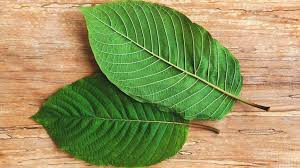 Kratom For Depression And Anxiety Types Dosage Side