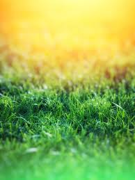 Green Grass over Yellow Background ...