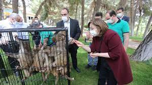 Sınırda yakalanan hayvanlar Gaziantep Hayvanat Bahçesi'ne emanet - Dünya  Gazetesi