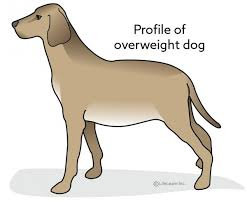 Dog Weight Loss Chart Creating A Weight Reduction Plan For Dogs Vca Animal Hospital