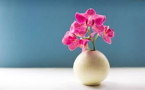 Wallpaper Bunga Anggrek Orchid Flower Wallpaper For