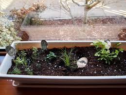Kitchen Windowsill Herb Garden Pretty Kittens Kitchen Windowsill Herb Garden In 10 Simple Steps