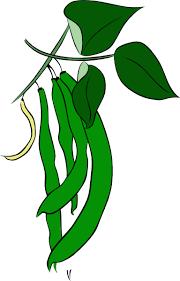 green beans clip art. Fine Art Green Beans Clip Art In Clip Art R