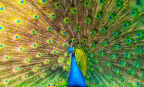 How Color Vision Came to the Animals   WIRED