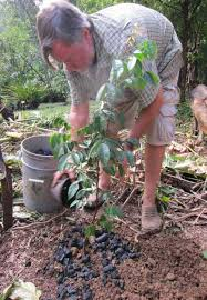 activated charcoal for gardening effective uses of activated charcoal