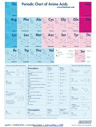 1 Amino Acid Chart Templates Free Templates In Doc Ppt