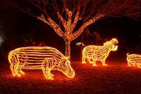 zoo lights. Unique Zoo ZooLights To Zoo Lights