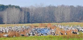 DNR: Sandhill <b>Cranes</b> Fall Migration