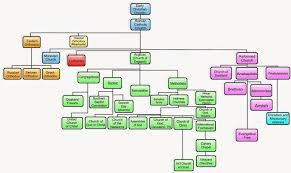 Org Chart Of Christian Sects Christian Missionary