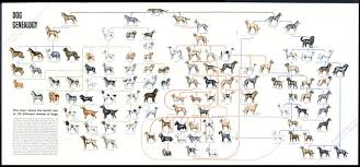 Dog Genealogy Chart 1949 Dog Genealogy History Family Tree 114 Breeds Vintage Poster Print Article Ebay