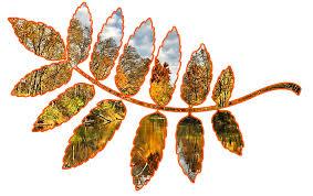 Картинки по запросу разделители осенние листья