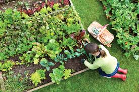 Kitchen Garden Plants How To Start A Vegetable Garden Hirerush Blog