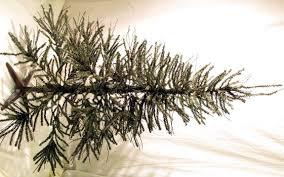 14 Weirdest College Christmas Trees  Essay TigersTwig Tree Christmas
