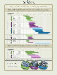 Blackberry Ripening Chart New Bb Grower Zone 6b Ourfigs Com