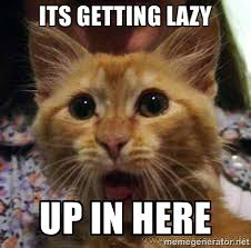 Its getting lazy up in here - Crazy cat | Meme Generator via Relatably.com