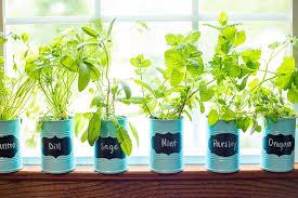 indoor herb gardens container herb gardens