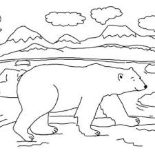 Small Picture Arctic Colouring Pages Polar Animal Coloring And Animals Pagesjpg