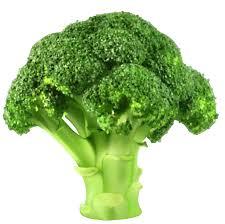 broccoli clipart. Brilliant Broccoli Broccoli PNG Clipart Inside V
