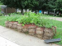 starting a straw bale garden how to plant straw bale garden beds
