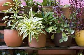 how to plant a container garden diy