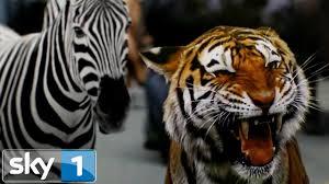 Trailer <b>Zoo</b> Season 2 Starts Sunday 17th July - YouTube