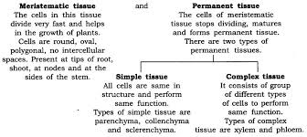Flow Chart Of Animal Tissue Class 9 Ncert Solutions For Class 9 Science Chapter 6 Tissues