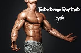 testosterone enant dosage cycle