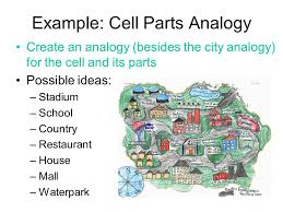 Cell City Analogy Examples Cell City Analogy Examples Magdalene Project Org