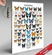 Details About Butterflies Chart Poster 30x21cm Butterfly Print Gift Home Wall Decor