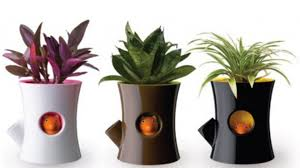 Small Picture Articles with Funny Plant Pot Ideas Tag Pot Plant Designs Images